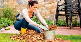 Особенности подготовки плодовых деревьев к зиме