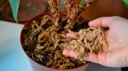 Правила приготовления грунта для антуриума