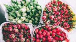 Посадка тюльпанов осенью в открытый грунт