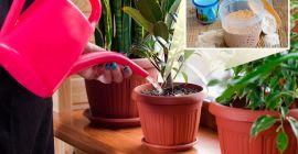 Рецепты приготовления дрожжевой подкормки для комнатных растений