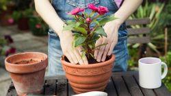 Пересадка комнатных растений в домашних условиях