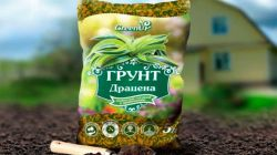 Состав почвы для выращивания драцены