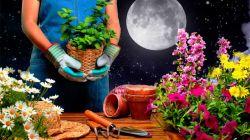Посадка и пересадка цветов по лунному календарю в 2019 году