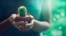 Особенности ухода за кактусами в домашних условиях