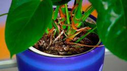Как избавиться от плесени на комнатных растениях