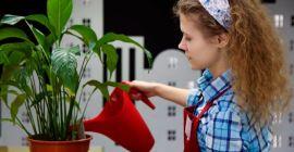 Как правильно поливать цветок спатифиллум