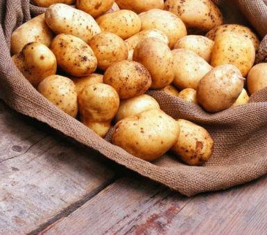 Места для хранения картофеля: погреб, холодильник и другие