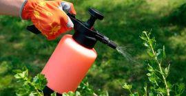 Осенняя обработка смородины: укрепит здоровье растения, повысит урожай
