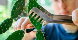 Как правильно сажать кактус