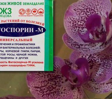 Особенности лечения орхидей препаратом Фитоспорин