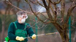 Как правильно обрабатывать плодовые деревья от болезней и вредителей в осенний период