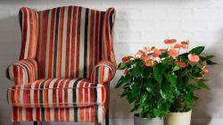 Выращивание экзотического цветка антуриум в комнатных условиях