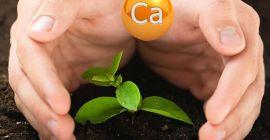 Роль кальция в жизни растений