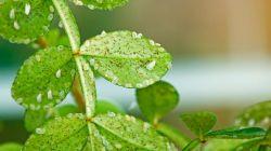 Как бороться с белокрылкой на комнатных растениях в домашних условиях