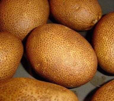 Особенности экзотического сорта картофеля – Киви
