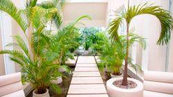 5 самых известных домашних растений, похожих на пальму