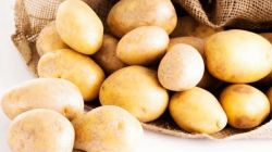 Главные характеристики картофеля Голубизна