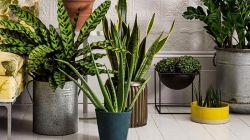 Какие бывают ядовитые домашние растения
