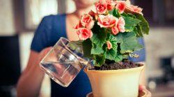 Правильный полив комнатных растений: в меру и вовремя