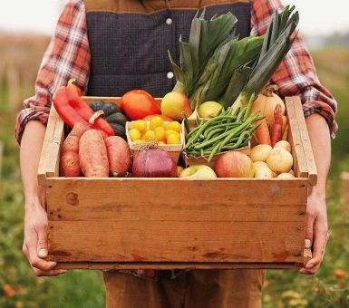 Сбор урожая – о чём надо помнить