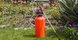 Можно ли применять керосин от сорняков?