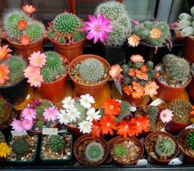Все виды и сорта кактусов