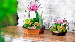Как выращивать суккуленты в вазе или аквариуме