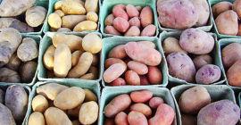Сколько картошки можно собрать с одного куста