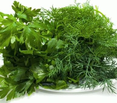Как посадить укроп и петрушку и чем подкормить для хорошего урожая