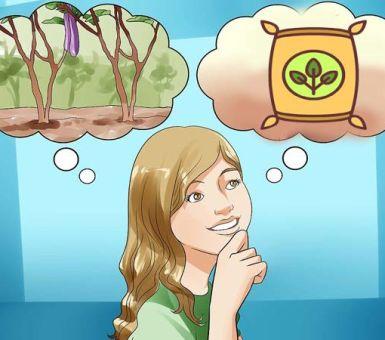 Чем подкормить баклажаны после высадки в теплицу