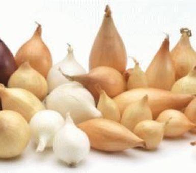 Как собрать семена (чернушку) репчатого лука: особенности агротехники