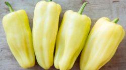 Сорт перца Белозерка: все, что нужно о нем знать