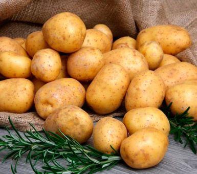 Особенности и секреты выращивания картофеля Невский