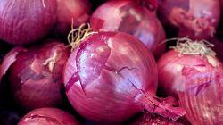 Как выращивать лук Ред Барон