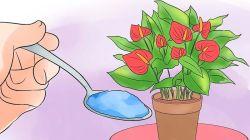 Чем лучше подкормить антуриум