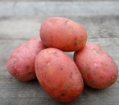 Особенности картофеля Лабелла