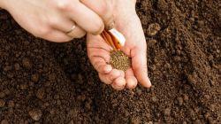 До какого числа можно сеять морковь весной и под зиму