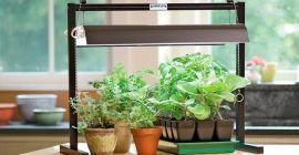 Какой свет нужен для растений в домашних условиях