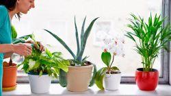 Самые полезные комнатные растения для квартиры