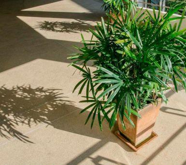 Уход за пальмой хамедореей в домашних условиях