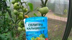 Применение кальциевой селитры при выращивании томатов