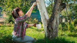 Когда и чем белить деревья осенью