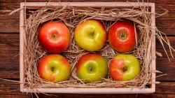 Правила хранения яблок в зимний период