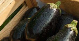 4 причины задержки роста баклажанов