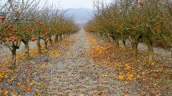 Обрезка плодовых деревьев в осенний период