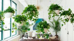 Самые красивые комнатные растения для дома