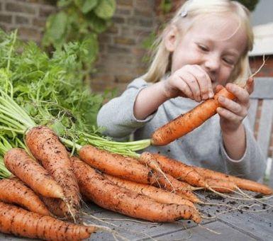 Как вырастить крупную и здоровую морковь