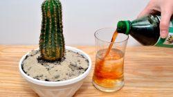 Удобрения для кактусов и других суккулентов: какие, когда, сколько
