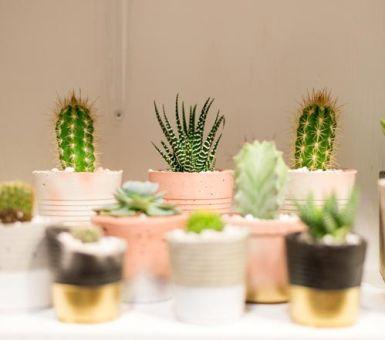 Выращивание маленьких кактусов в домашних условиях
