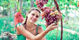 Что нужно знать о винограде Преображение